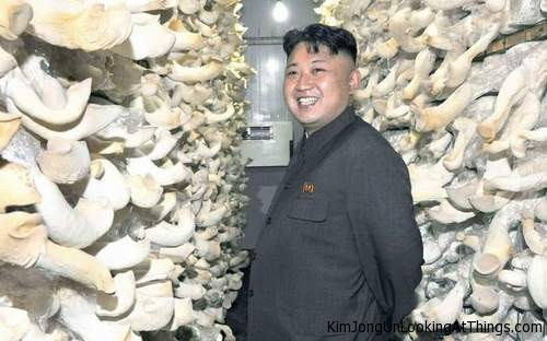kim jong un looking at mushrooms